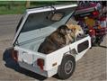 DogTrailers