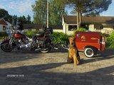 DogTrailer DT1_7